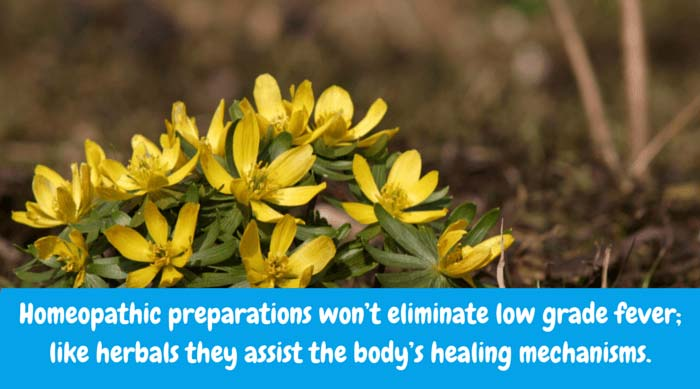 Homeopathic preparations won't eliminate low grade fever; like herbals they assist the body's healing mechanisms. Belladonna, Bryonia and Aconite are helpful homeopathic remedies.